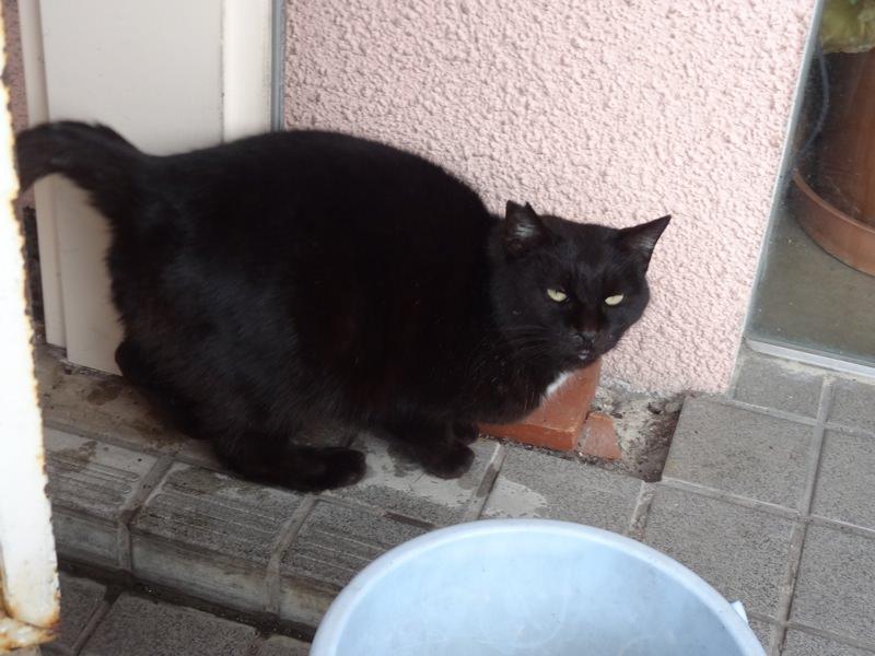 世世の前にいた黒猫
