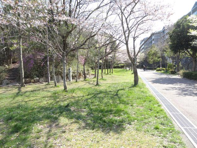 岡場公園は一面桜が咲いています